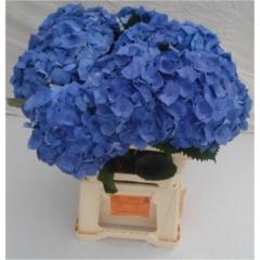 Hydrangea Bela blue 60cm