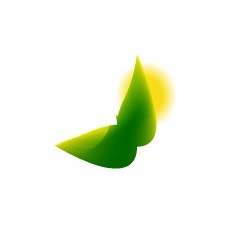 Cymbidium mini green 60cm