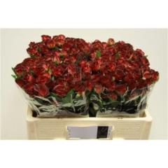 Rose spray Chococcino 50cm