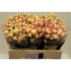 Rose spray Candelicious 50cm