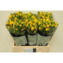 Rose spray Yellow Babe 60cm
