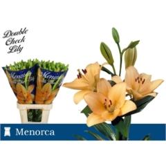 Lilium La Menorca 4-6 90cm